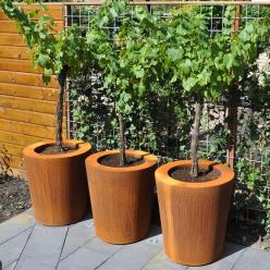 Corten Steel Cado Tapered Cylinder Planter